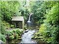NY3606 : Rydal Hall & Gardens [12] by Michael Dibb