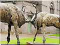 V9690 : The Red Deer of Ireland by David Dixon
