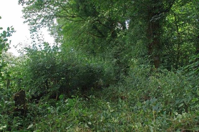 New Hedge Aug 2019