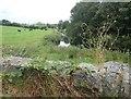 H9022 : The Cullyhanna River above Skerriff Bridge by Eric Jones