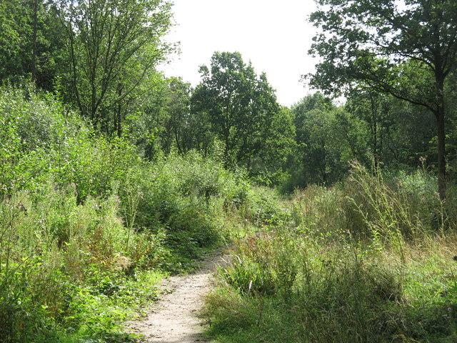 Permissive bridleway in Bishop's Wood