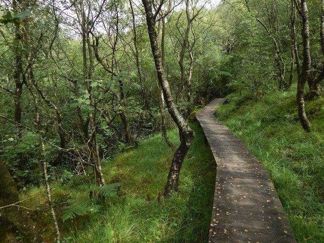 A boardwalk in Shielhill Glen