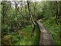 NS2371 : A boardwalk in Shielhill Glen by Lairich Rig