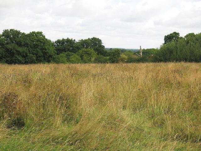 Public footpath across a field near Oakfield Farm