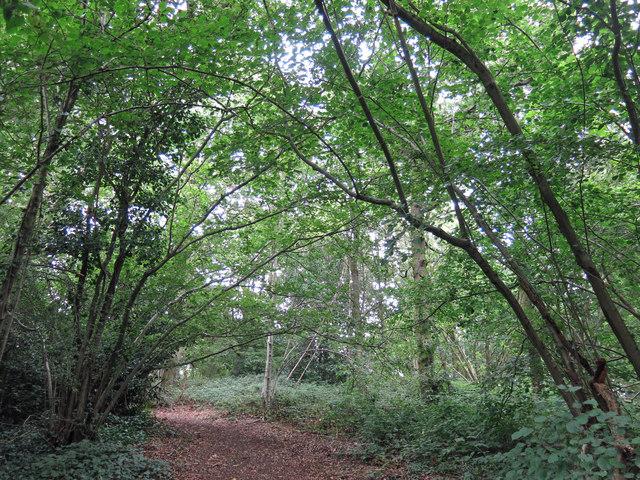 Path in Juniper Dell