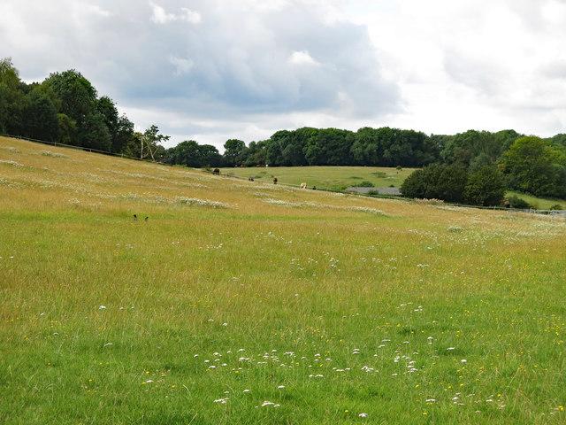 Farmland at Stocker's Farm