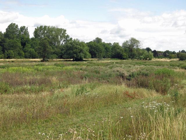 Scruffy horse-grazing pasture east of Stocker's Lock (2)