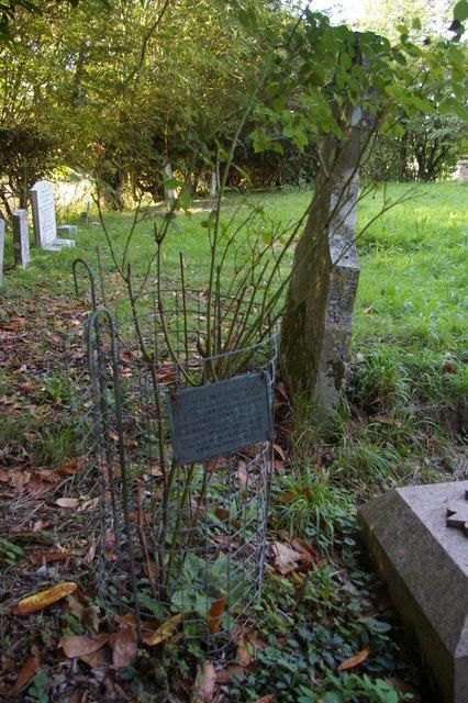 Rose marking Edward Fitzgerald's grave, Boulge