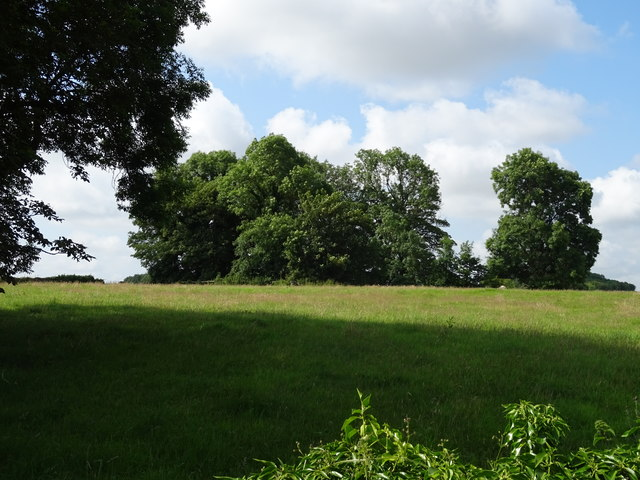 Grazing and woodland near Newhouse Farm
