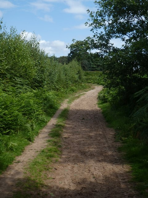 Sandy track on East Budleigh Common