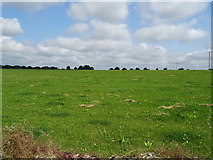 ST7881 : Grassland off the B4040 by JThomas