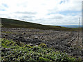 SN7770 : Clear-fell at the south of Coed Bwlchgwallter by John Lucas