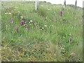 NM8341 : Roadside orchids, Lismore by M J Richardson
