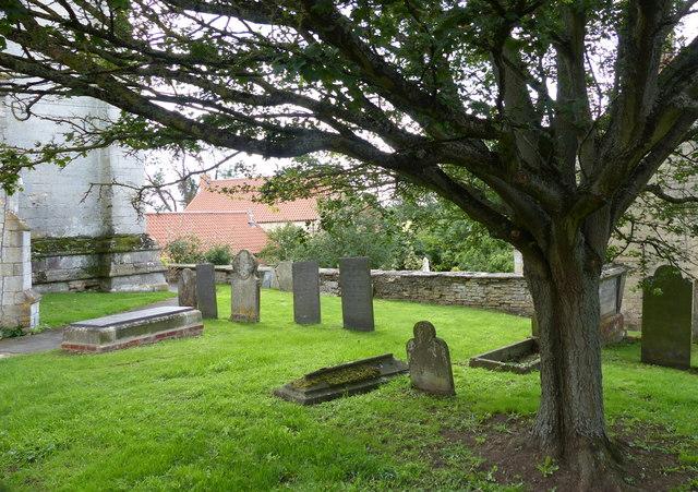 Tree in the churchyard of St John the Baptist