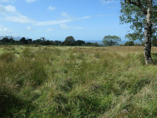 Rough grazing between Cae Haidd Bach and Cae Haidd Mawr