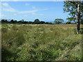 SH4956 : Rough grazing between Cae Haidd Bach and Cae Haidd Mawr by Christine Johnstone