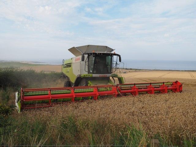 Claas Combine Cutting Wheat at Birnieknowes