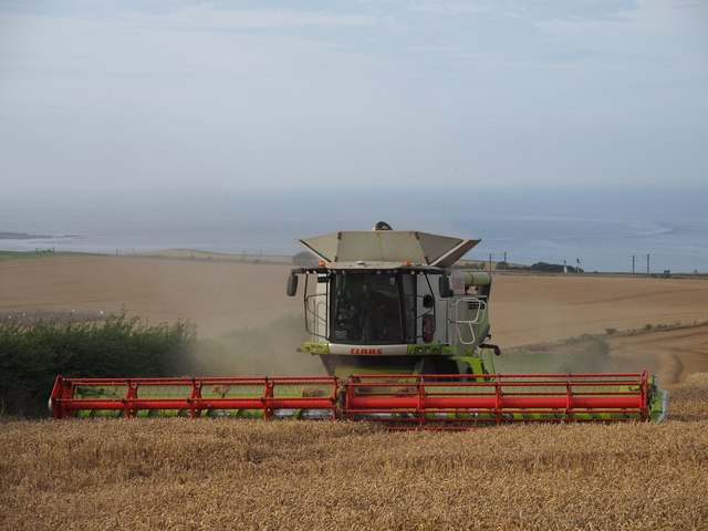 Claas Combine cuts Wheat at Birnieknowes