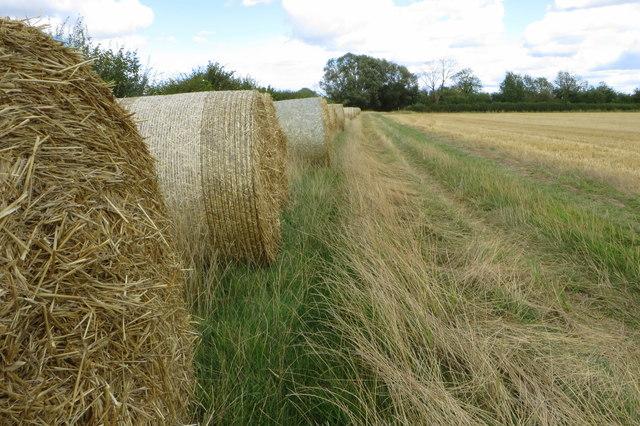 Footpath by the hay reels