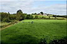 H5266 : Laragh Townland by Kenneth  Allen