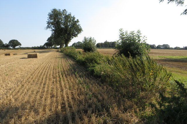Farm hedgerow