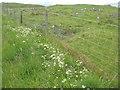 NM8440 : Roadside vegetation, Lismore by M J Richardson