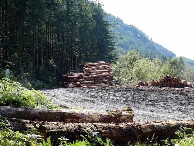 Timber yard at Dologau