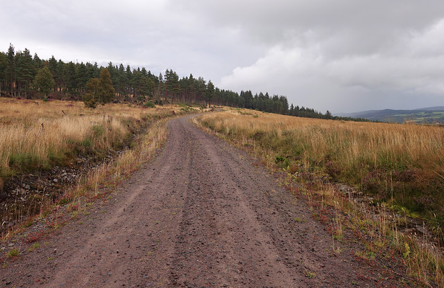 Track, Boblainy Forest
