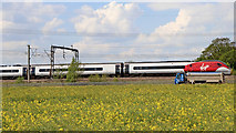 SK1409 : Rapefield and railway near Huddlesford in Staffordshire by Roger  Kidd