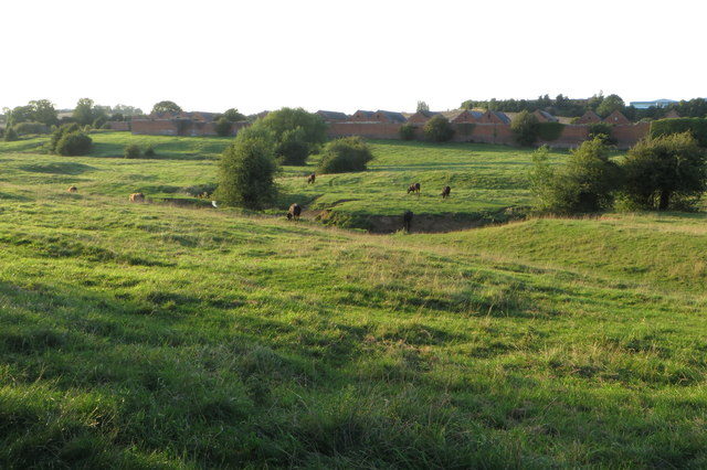 Cattle grazing by the River Nene