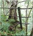 NU0700 : Birch tree envelops railing by Russel Wills