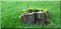 SE8383 : Tree Stump, Thornton-le-Dale by Christine Matthews