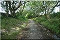 SH5059 : Bryngwyn Branch slate trail nearing Tryfan Junction by Christine Johnstone