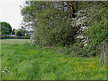 SK1409 : Pasture by the canal south-west of Huddlesford, Staffordshire by Roger  Kidd