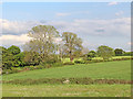SK1409 : Pasture and woodland near Huddlesford in Staffordshire by Roger  Kidd