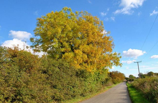 Littleton Drew Lane, Acton Turville, Gloucestershire 2015