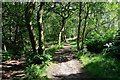 SJ2484 : Path below Thurstaston Hill by Jeff Buck