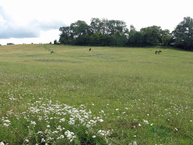 Horses grazing at Stocker's Farm
