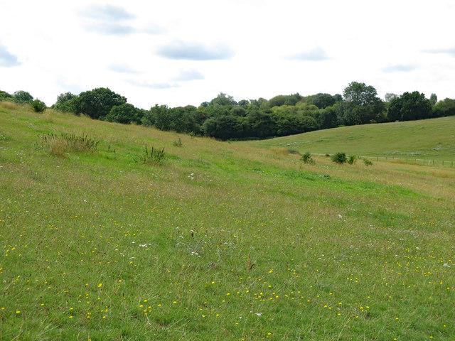 Farmland north of Cooks Wood