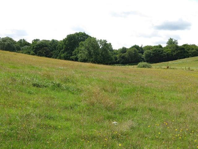 Farmland north of Cooks Wood (2)