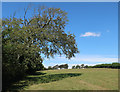 SX5451 : Footpath to Combe by Hugh Venables