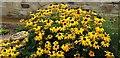 NZ6621 : Flower Beds in Fossil Garden, Saltburn by the Sea by Christine Matthews