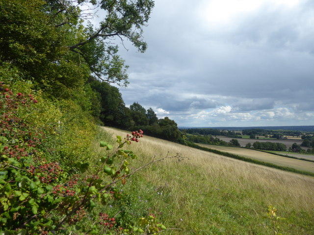 Blackberries on the North Downs