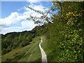 TQ5559 : The scarp slope of the North Downs on Kemsing Down by Marathon