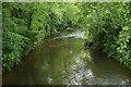 ST3605 : River Axe at Forde Bridge by Derek Harper