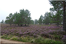 NH8520 : Moorland in the Rain by Anne Burgess