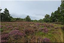 NH8620 : Boggy Moorland by Anne Burgess