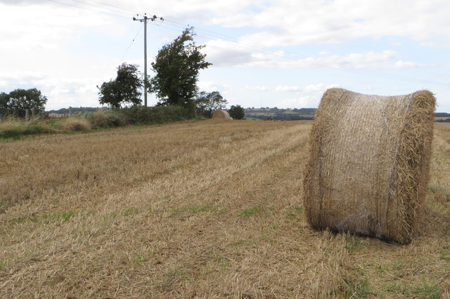Straw rolls on Weedon Hill