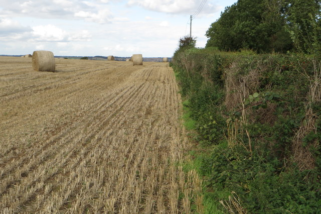 Hedge and harvested field