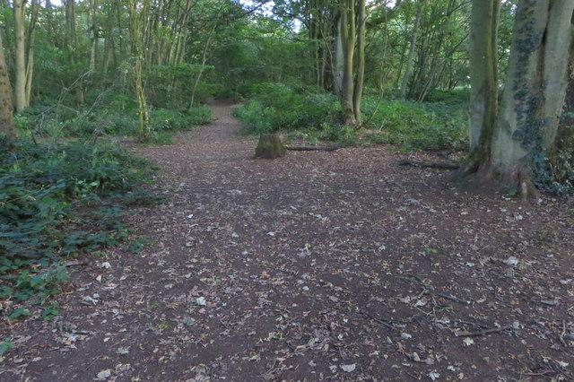 Path through Mantles Heath
